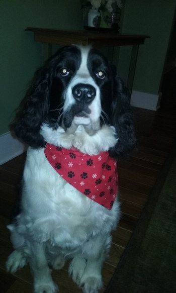 Christmas over the collar dog bandanas
